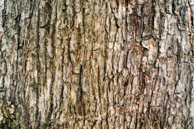 Bark: a mill by-product replacing fossil fuels